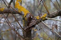 Cuore di legno Fotografie Stock