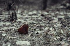 Cuore di legno ago del Abete-cono e fondo delle foglie sprecato Primo piano fotografia stock libera da diritti
