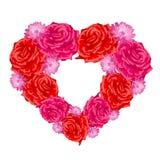 Cuore di Rosa sopra bianco. Immagine Stock