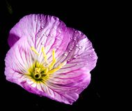 Cuore di un fiore Fotografia Stock