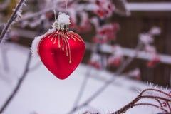 Cuore di vetro di Ed su neve Sorba rossa delle bacche in brina nel gelo Fotografia Stock Libera da Diritti