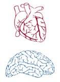 Cuore e cervello Fotografia Stock Libera da Diritti