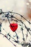 Cuore e filo spinato rossi immagine stock libera da diritti