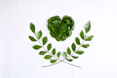 Cuore e ramo di ulivo verdi Immagine Stock