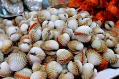Cuore edule un commestibile, burrowing mollusco bivalve con un forte costolato fotografie stock