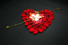 Cuore fatto dai petali di rosa Immagine Stock