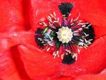 Cuore floreale del papavero Fotografie Stock Libere da Diritti