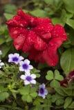 Cuore floreale due Immagine Stock Libera da Diritti