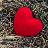 Cuore rosso Fotografie Stock