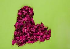 Cuore rosso della Rosa Fotografia Stock Libera da Diritti