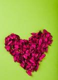Cuore rosso della Rosa Immagini Stock