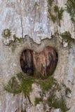 Cuore su legno Fotografia Stock Libera da Diritti