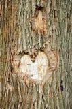 Cuore su un albero Fotografie Stock