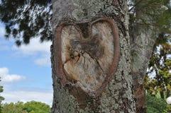 Cuore su un albero Fotografia Stock