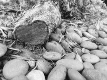 Cuore su un albero Fotografia Stock Libera da Diritti