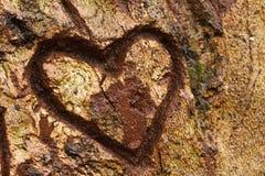 Cuore sull'albero Fotografia Stock Libera da Diritti