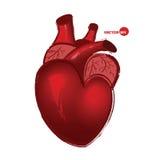 Cuore umano anatomico su fondo bianco, assorbente stile del fumetto Cuore rosso realistico, saluto di San Valentino Immagine Stock
