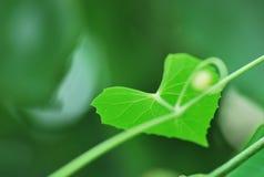 Cuore verde Fotografia Stock