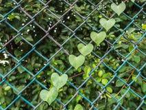 Cuore verde Immagini Stock Libere da Diritti