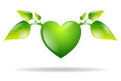 Cuore verde con le foglie isolate Immagini Stock