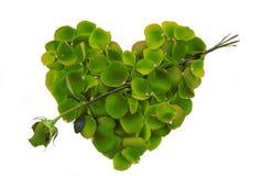Cuore verde del petalo di Rosa con la freccia Immagini Stock