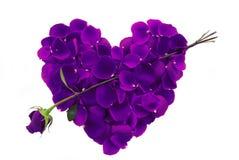 Cuore viola del petalo di Rosa con la freccia Immagini Stock