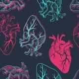 Cuori anatomici Immagini Stock