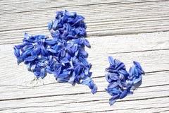 Cuori blu del petalo Fotografie Stock