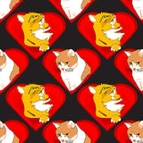 Cuori con i gatti nel modello di amore Fotografie Stock Libere da Diritti