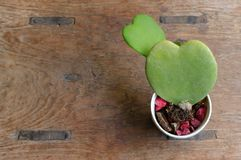 2 cuori della pianta dell'innamorato fotografia stock