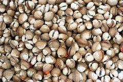 Cuori edule freschi da vendere al mercato asiatico dei frutti di mare Fotografia Stock
