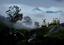 Cuorious-Schafe in einer nebeligen Landschaft Lizenzfreie Stockbilder