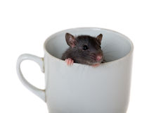 In a cup Royalty Free Stock Photography