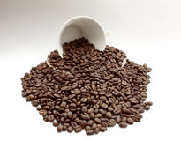 Cup. A cup filled with coffee beans royalty free stock photos