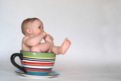 A Cup of Baby Royalty Free Stock Photo