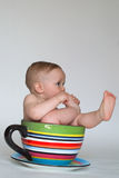 A Cup of Baby Stock Image