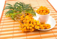 Cup berries medical. Branch of sea-buckthorn with cup berries medical useful medicinal to napkin in strip Stock Photo