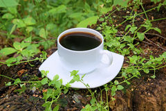 Cup of black coffee in the forest Royalty Free Stock Photography