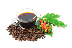 A cup of black coffee with roasted coffee beans, coffee leaves, red and green coffee berries on branch. Stock Images