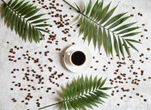 Cup of black espresso on a white creative concrete background with coffee beans and palm branches. Rest in warm tropical Stock Image
