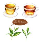 Cup of the black and green tea and tea leaves isolated on the white background. Royalty Free Stock Photos
