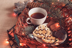 Cup of black tea and chocolate chip cookies with fir-tree branches with Christmas garland. Cup of black tea and chocolate biscuits with green spruce branches Royalty Free Stock Image