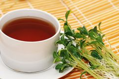 Cup of black tea and herbs on  Stock Image