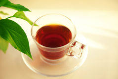 Cup of black tea and leaf Stock Photos