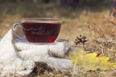 Cup of black tea with white warm scarf at nature with yellow oak Royalty Free Stock Photography