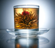 Cup with blooming flower tea Royalty Free Stock Photos