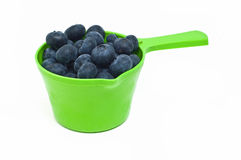 Cup of blueberries Royalty Free Stock Image