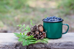 Cup of blueberries and pine cone spruces Royalty Free Stock Image