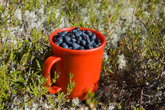 Cup of blueberry Stock Photo