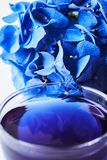 Cup of butterfly pea tea Stock Photos